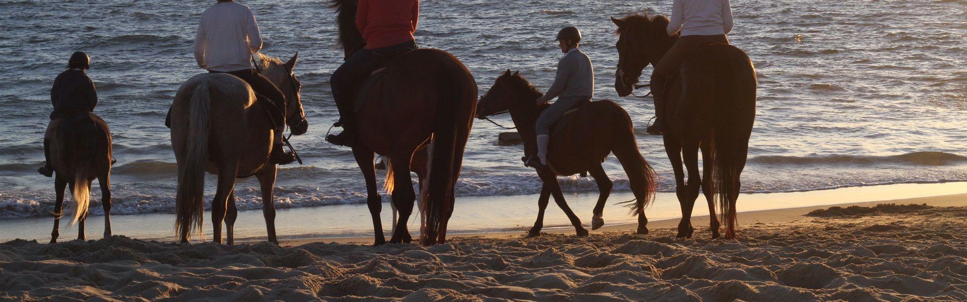chevaux à la plage
