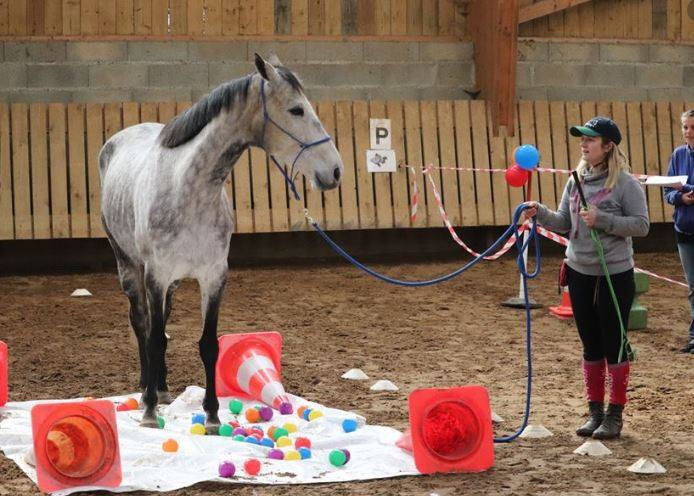 Les lundis des professionnels CDE 17 formation équitation disciplines