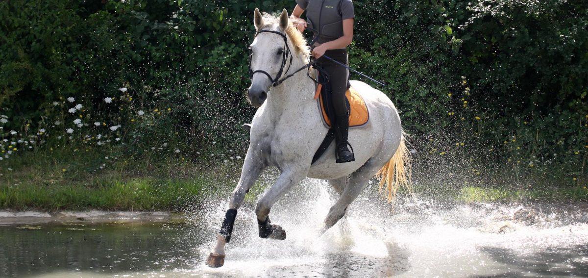 reprise de l'équitation Covid-19 confinement équitation CDE17 flash info FFE reprise de l'équitation activité de plein air déclaration gouvernement