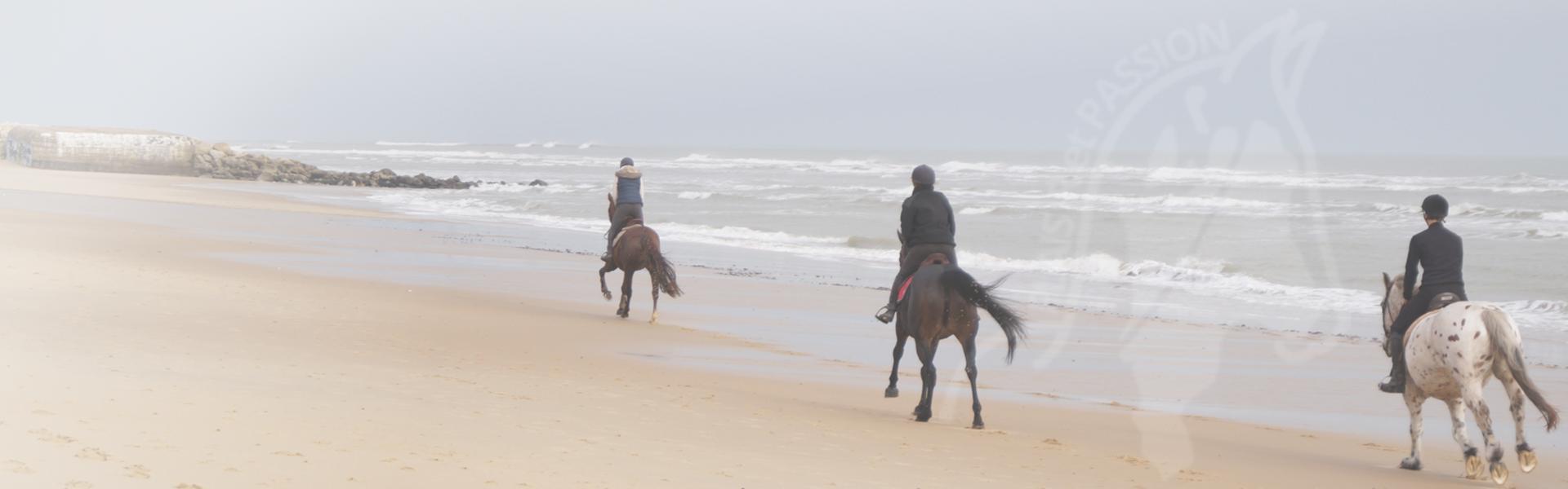 galop sur la plage