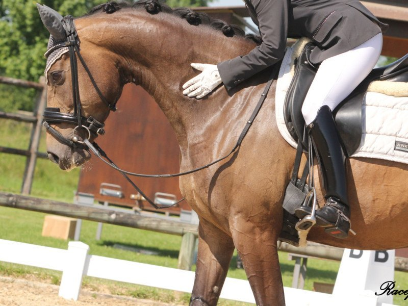 devenir juge de dressage