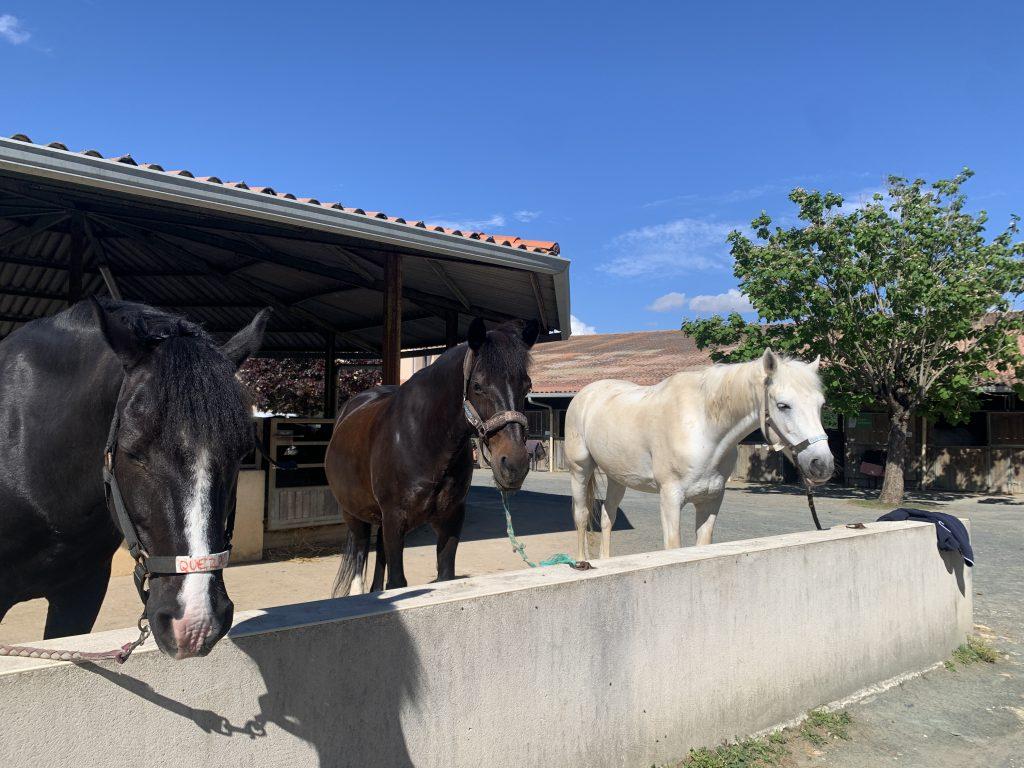 poney de la maison du poney